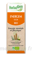 Herbalgem Energem Solution Buvable Bio Fl Cpte-gttes/30ml à BAR-SUR-SEINE